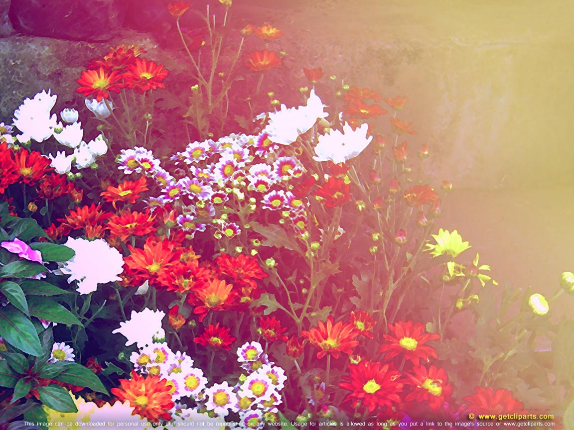 Pretty flower backgrounds - colorful flowers